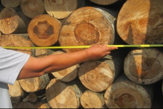 Screenshot 10 2 560x375 - Konfiskohen 55 metra dru në Ferizaj