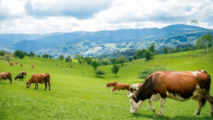 WP 6 - Nuk është Zvicra, janë malet e Jezercit: Shikoni këto foto të mrekullueshme nga ky fshat piktoresk i Ferizajt