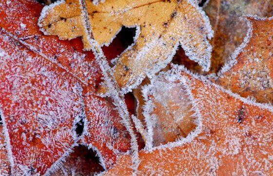 p1nayc7yncxi2aigli2e 600x3601 1 560x360 - Ndryshon moti, borë e shi në fundjavë