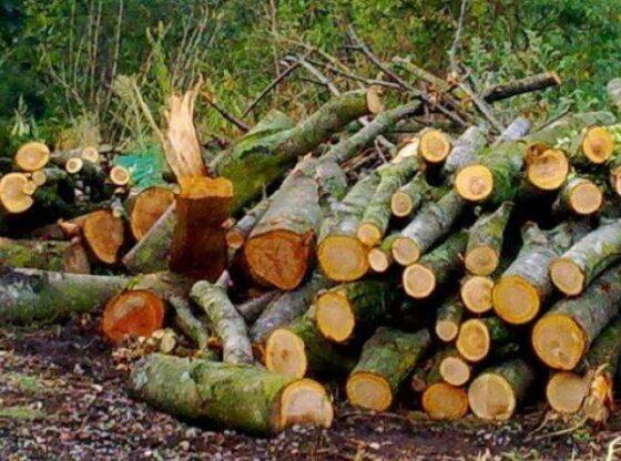 w 2 560x416 - Ferizaj: Një person lëndohet duke prerë dru
